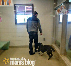 Oklahoma City Local Animal Shelters holding room