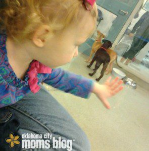 tips for kids visiting the local animal shelters in OKC