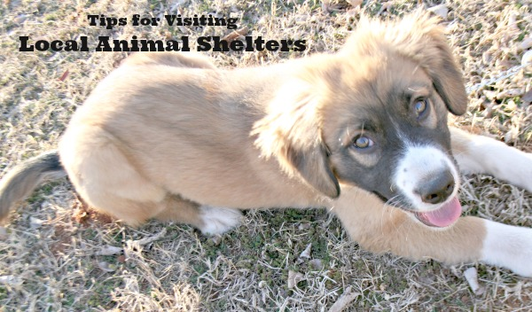 Tips for visiting local animal shelters in Oklahoma City