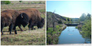 Absolutely beautiful bison refuge!