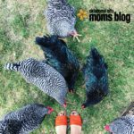 What the Cluck? Why We LOVE Our Backyard Chickens