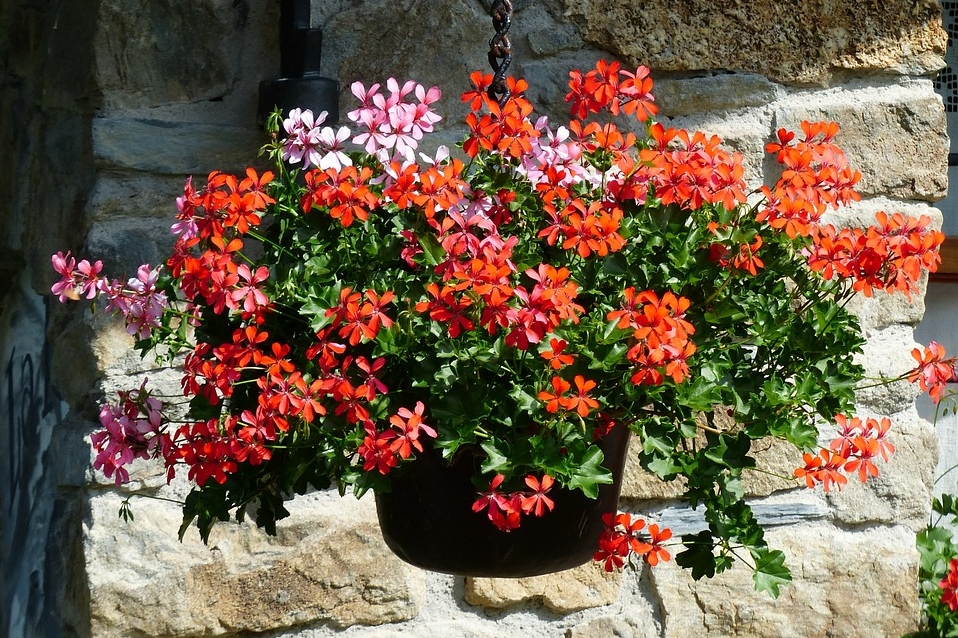 Red geranium pot 10 ways for your home to say summer