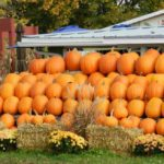 5 OKC Metro Pumpkin Patches You Don't Want to Miss
