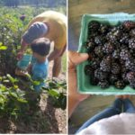 """Summer 2019 Guide to """"You Pick"""" Farms & Orchards"""